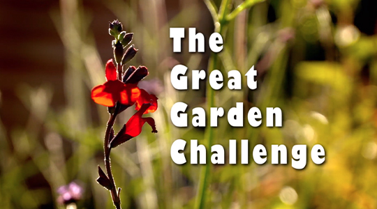 The Great Garden Challenge